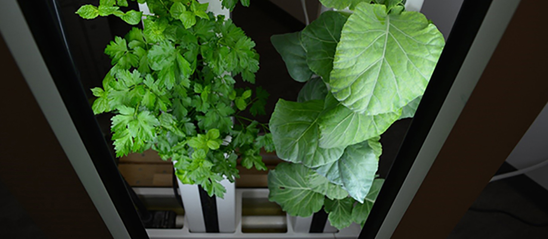 Indoor Farming at University of Toronto (Missisauga)